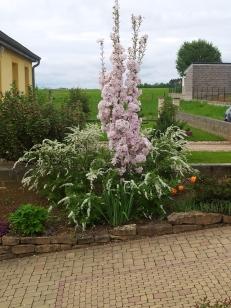 Plantes printanières